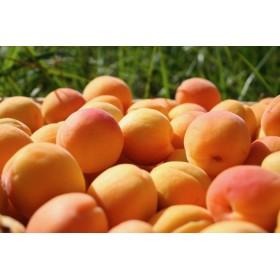 Coulis Abricots