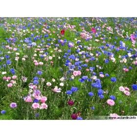 Miel toutes fleurs BIO