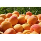 Coulis Abricots Terroir